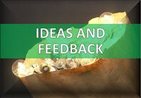 Suggestion Box - Ideas - Feedback